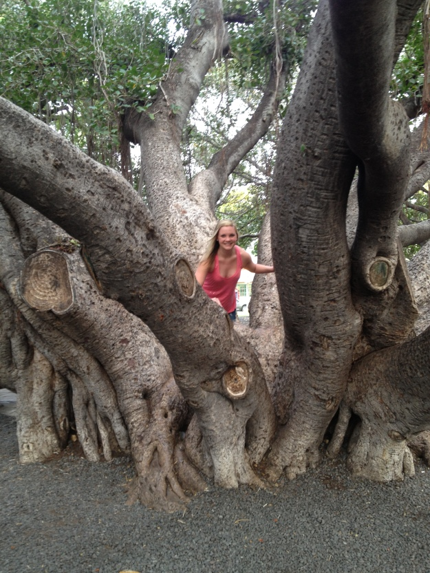 Banyan Tree! Have you seen this tree? It's the coolest. I also swear I wasn't trying to flash everybody.